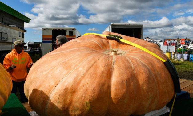 Record Setting Giant Pumpkin Grown In Alaska
