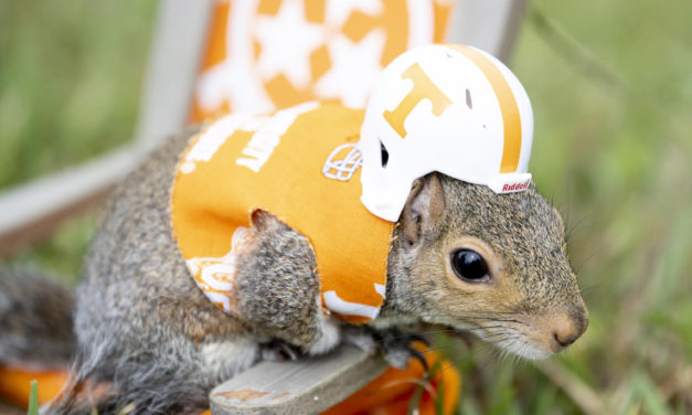 Meet The Squirrel Who Goes To Vols Games In Uniform