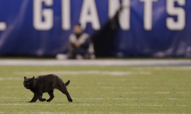 Black Cat Was Ready For Some Football At MetLife Stadium
