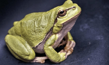 School Finds Alternative For Dissecting Frogs In Class