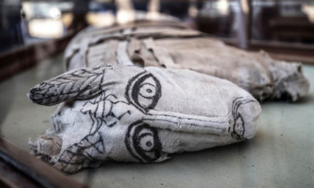 Egypt Unveils Mummies Of Lion Cubs, Crocodiles And Birds