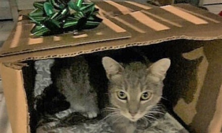 Florida Cat Reunited With Owner Two Years After Hurricane Irma