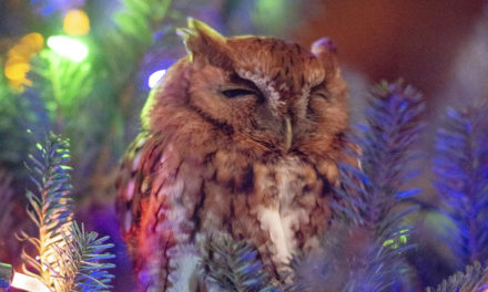 Whoo's There? Family Finds Owl Hiding In Christmas Tree