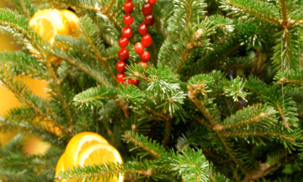 Recycle! Give Your Christmas Tree A Second Life In The LandscapeRecycle! Give Your Christmas Tree A Second Life In The Landscape