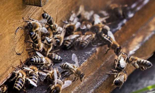 Nearly 100 Beehives Stolen From California Orchard