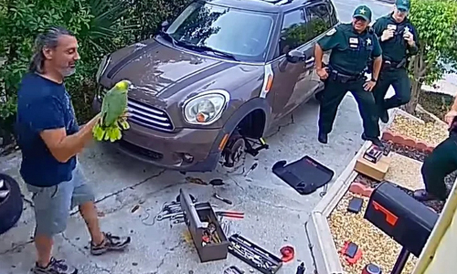 Police Respond When Parrot Cries Let Me Out!