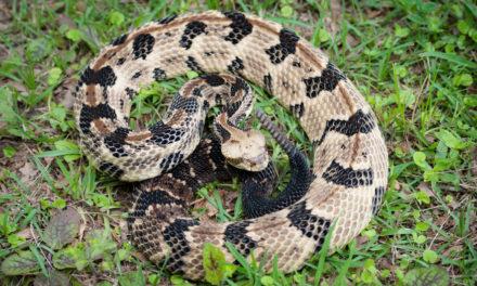 Snake Bites Hunter On Head Making Him 'Unluckiest Guy'