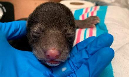 Bear Foster Mom Raises Cub Saved By Dog