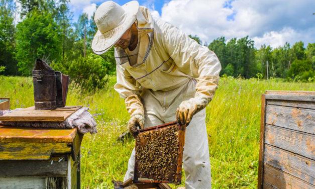 Backyard Gardeners Can Act To Help Bee Populations