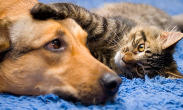 Humane Society Of Catawba County Offers Affordable Vaccine Clinics Every Friday