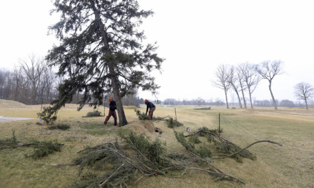 Famous Hinkle Tree From The '79 US Open Is Uprooted By Wind