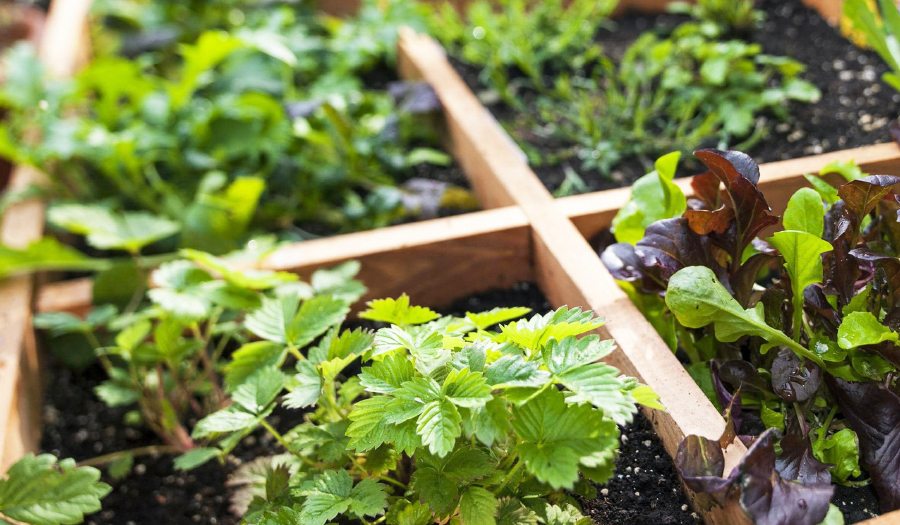 Sustainable Gardening Includes Eco-Friendly Practices