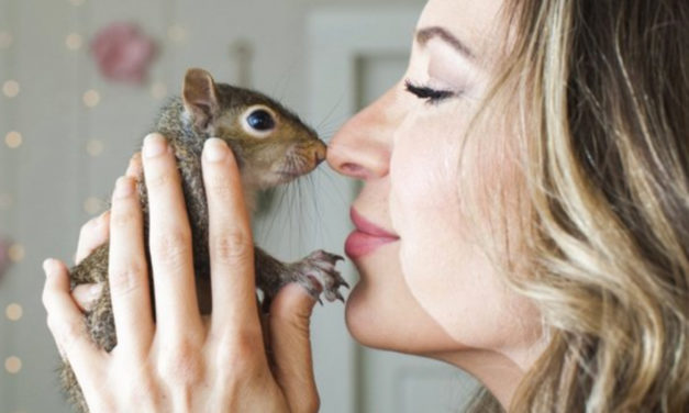 One-Eyed Squirrel With Instagram Account Is Returned To Nature