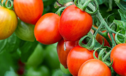 Catawba County Gardening Program Features Zoom Classes
