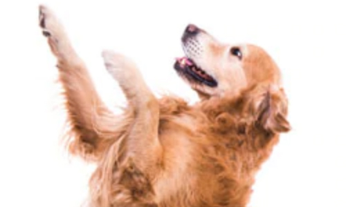 Pet Supermarket's 2020 Casting Call Contest, Now – May 31