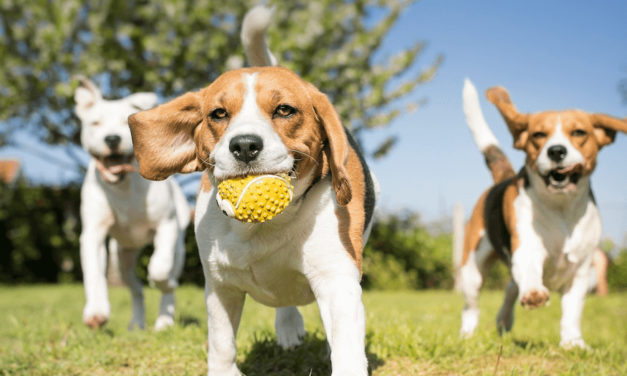 City Of Dallas Celebrates Grand Opening Of Dog Park, June 19