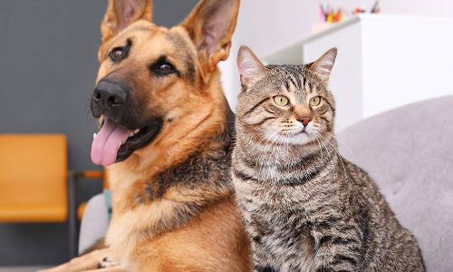 Catawba County Animal Shelter Closed For Cleaning Until 7/7