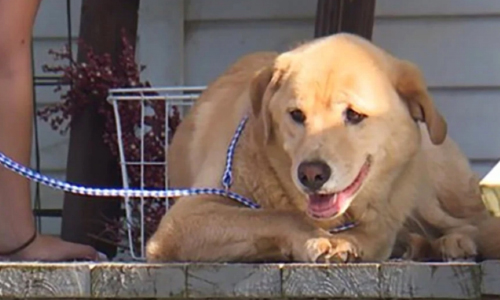Kansas Dog Travels 50 Miles To Her Old Home In Missouri