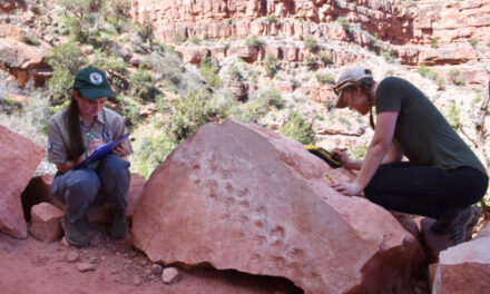 Rock Fall At Grand Canyon Reveals Ancient Footprints