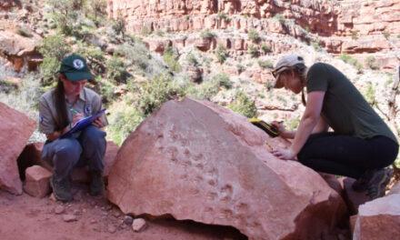 Rock Fall At Grand Canyon Reveals Ancient Footprints