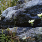 Register For The Artist's Workshop: Late Summer Sketching At Grandfather Mountain, 9/12