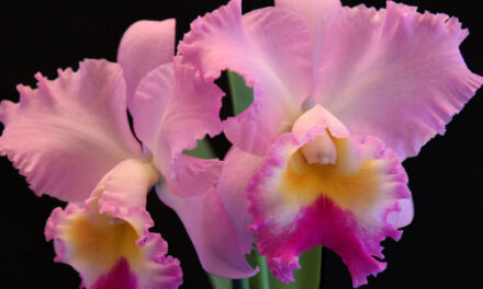 Ironwood Estate Orchids Fall Sale & Open House, 9/12 – 9/20