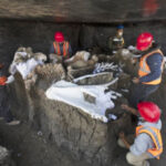 'Mammoth Central' Found At Airport Construction Site