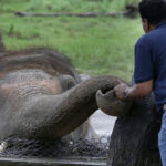 The World's Loneliest Elephant Okayed To Quit Zoo For New Life