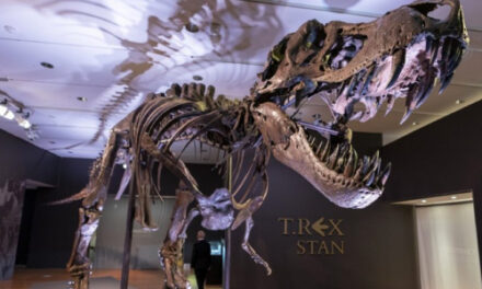 Bones To Pick? Take Stan The T-Rex Home For About $8M