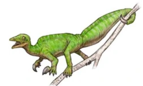 Researchers Discover Fossils Of New Species In Arizona