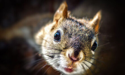 Squirrelly Situation: Critter Causes South Carolina Outages