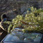 'Charlie Brown' Christmas Trees Lift School Spirits In Virginia