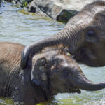 Second Young Elephant Dies From A Virus At New York Zoo