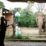 Worlds Loneliest Elephant Now Safe & Loved In Cambodia