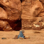 Utah Monolith Toppled By Group Who Said 'Leave No Trace'