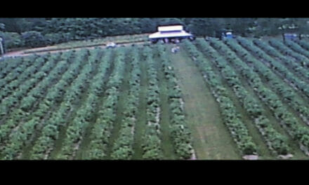 Campbell's Berry Farm Offers Free Workshop, Principles of Blueberry Pruning, To Public