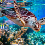 Rough Rescue: Storms, Broken Plane Force Layover For Turtles