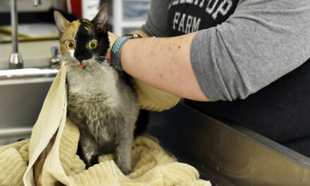 97 Cats Survive House Fire In NY