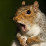 Serial Squirrel: Neighbors Keep Eye Out For Fierce Rodent