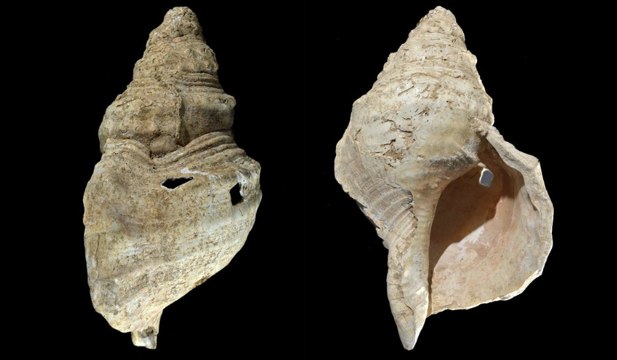 Ancient Shell Horn Can Still Play A Tune After 18,000 Years