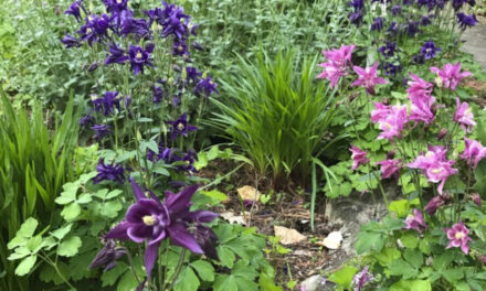 In An Anxious Winter, The Garden Still Offers Consolation