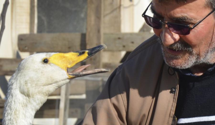 Turkish Man Strikes Up 37-Year Friendship With Swan