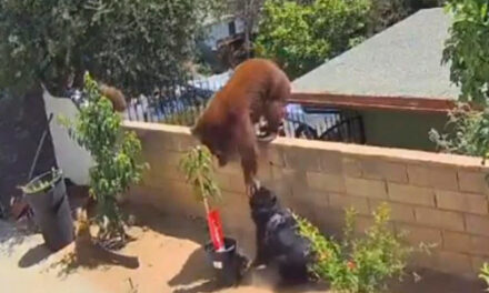 Teen Shoves Bear That Swatted Family Dog In California Yard