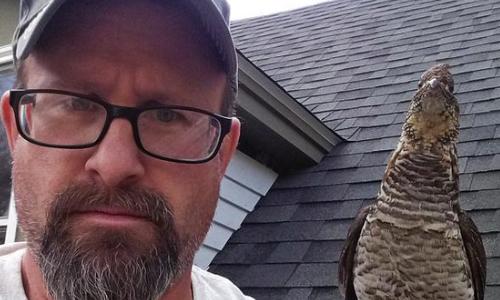 Walter The Grouse Becomes Man's Backyard Companion