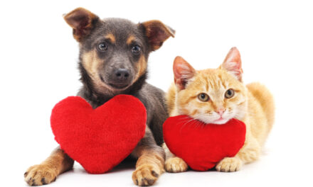 Be A Have A Heart Kennel Sponsor At Humane Society
