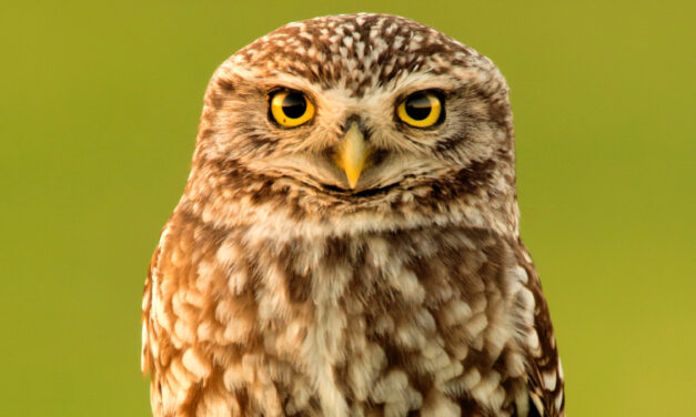 Register For Discover Owls With A State Park Ranger, July 13
