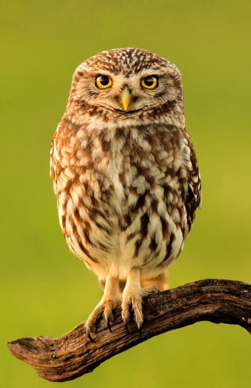 Register For Discover Owls