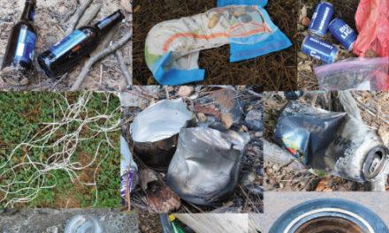 Litter -— Despite All Warnings