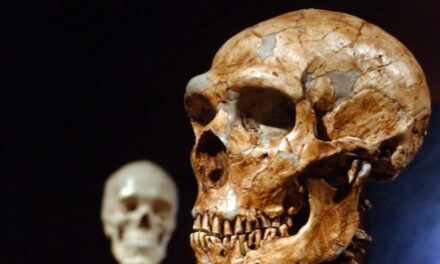 Study Shows Just 7% Of Our DNA Is Unique To Modern Humans