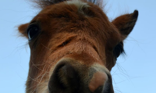 Filly Escapes Racetrack, Runs On Kentucky Highway